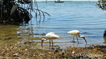 The Florida Keys Wild Bird Sanctuary