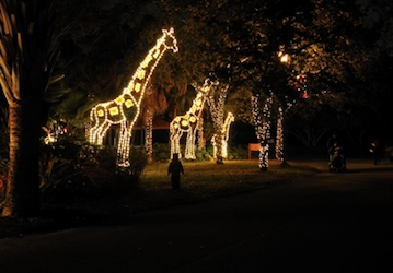 Zoo Miami Christmas